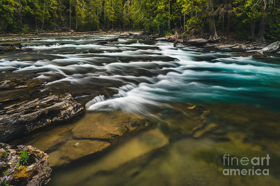 Forest Photograph - Clear Flowing River. Glacier National by Ryantangphoto