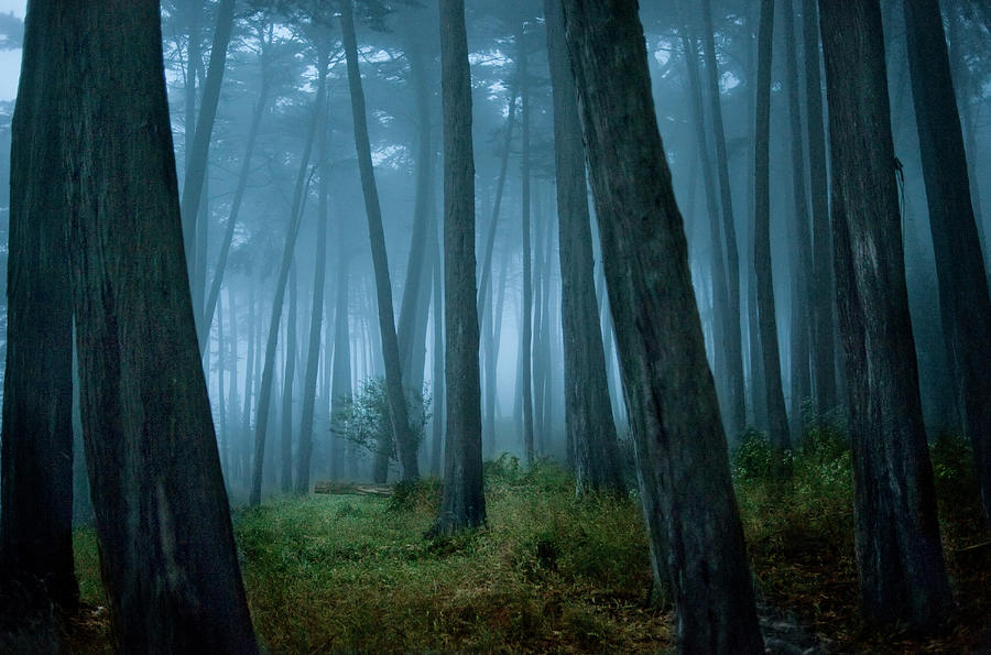 Clearing In Cypress Tree Forest Photograph by Siri Stafford