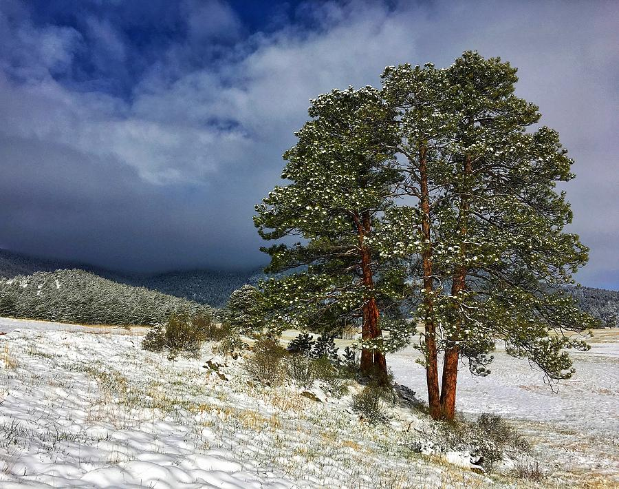 Clearing May Snowstorm by Dan Miller