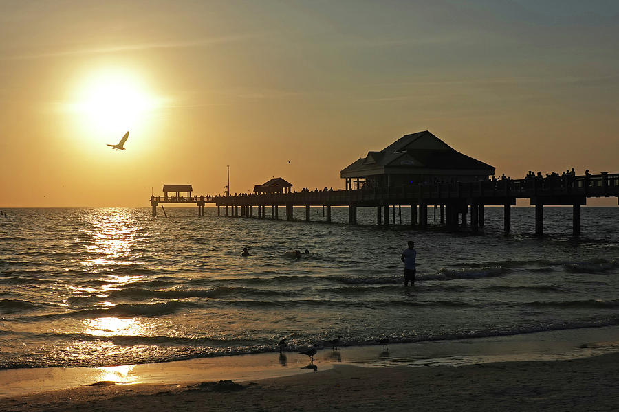 Clearwater Florida Sunset at the Pier FL Seagull by Toby McGuire