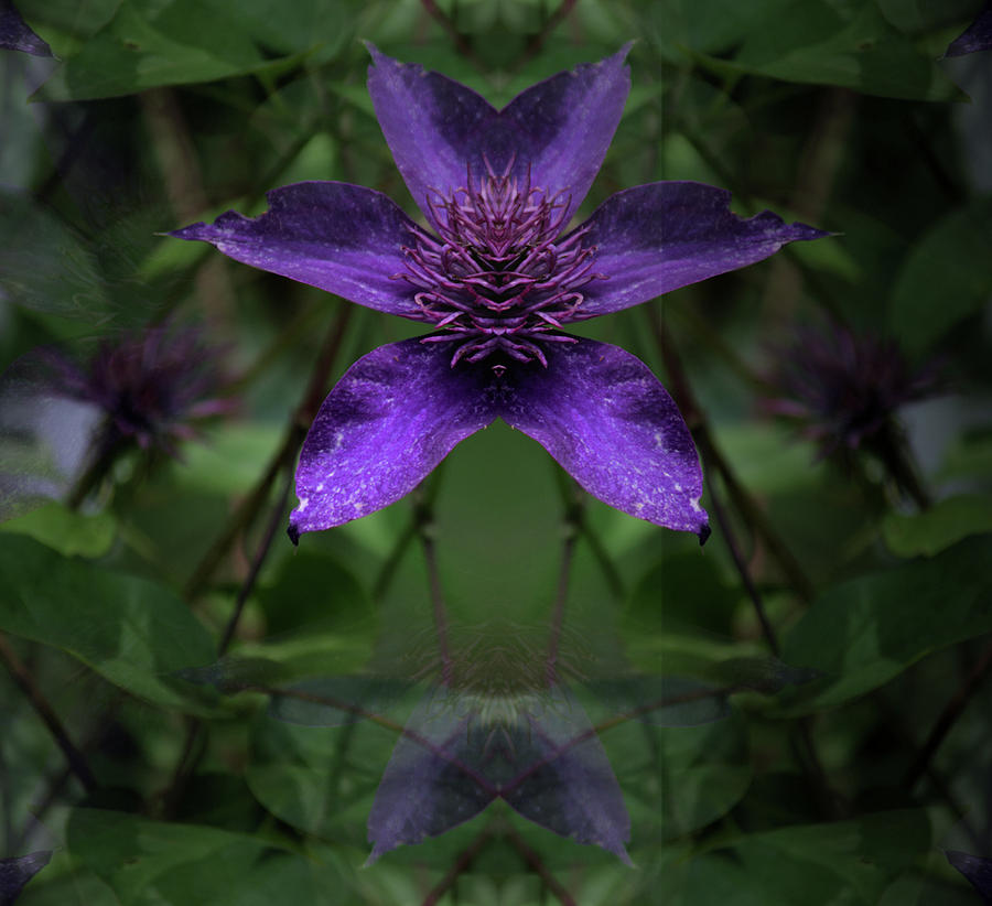Clematis 4 by Buddy Scott