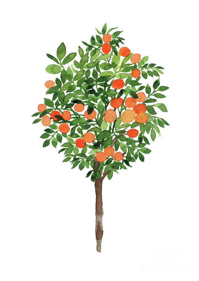 Clementine Tree Illustration Colorful Plant Watercolor Painting