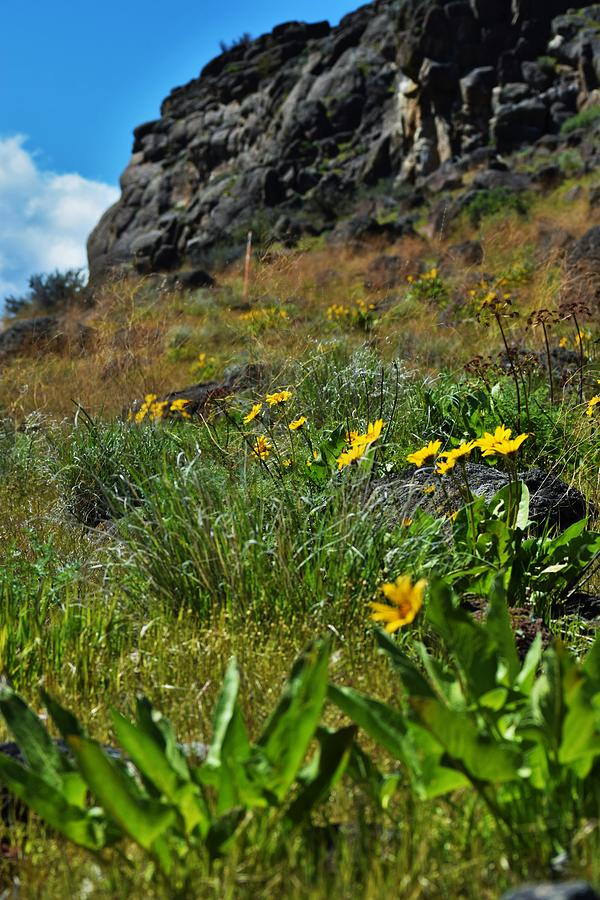 Cliffside Flowers by Lkb Art And Photography