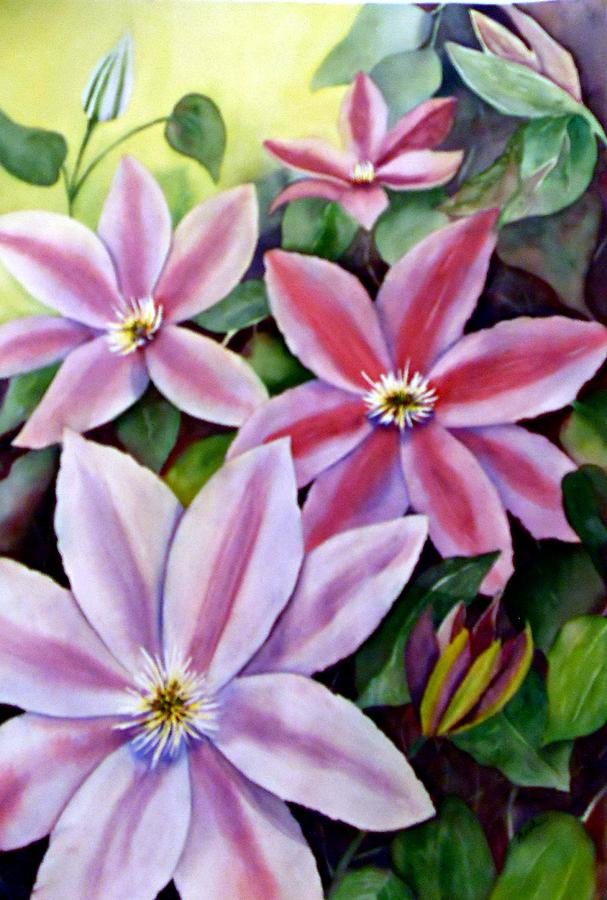 Climbing Clematis by Beth Fontenot