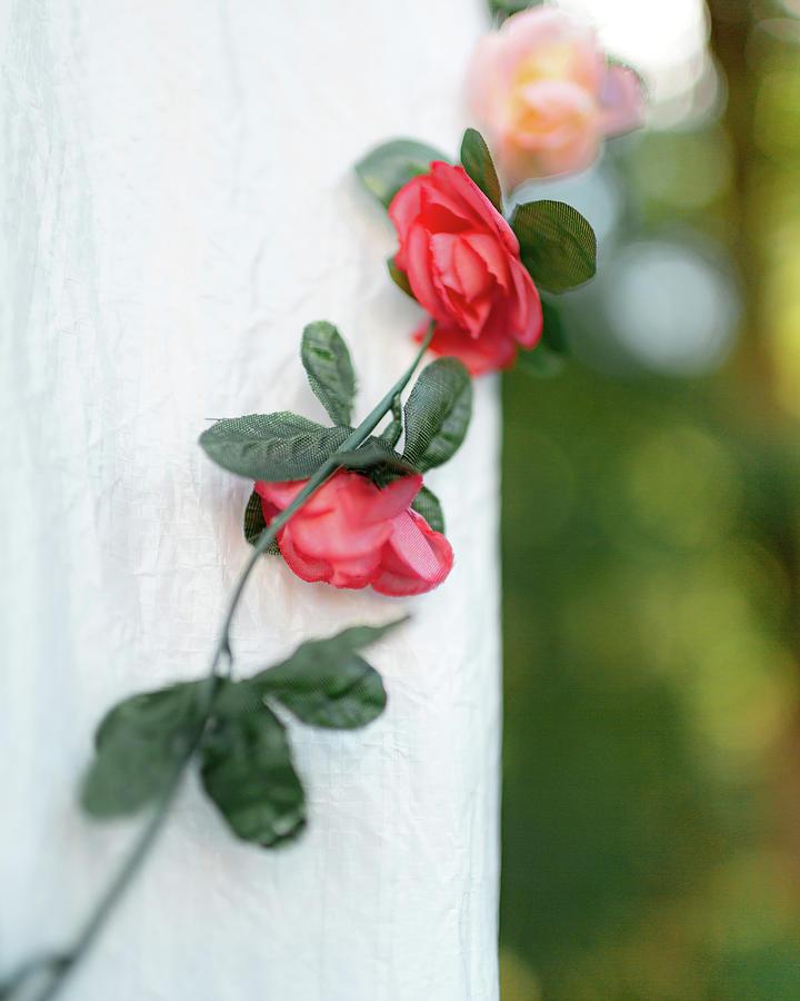 Climbing Flowers Left by Kolter Gunn