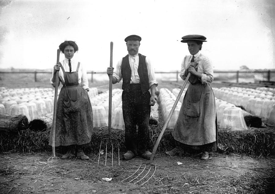 Cloche Farming Photograph by Topical Press Agency