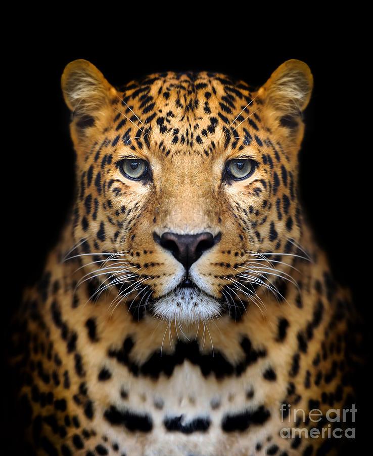 Big Photograph - Close-up Leopard Portrait On Dark by Volodymyr Burdiak