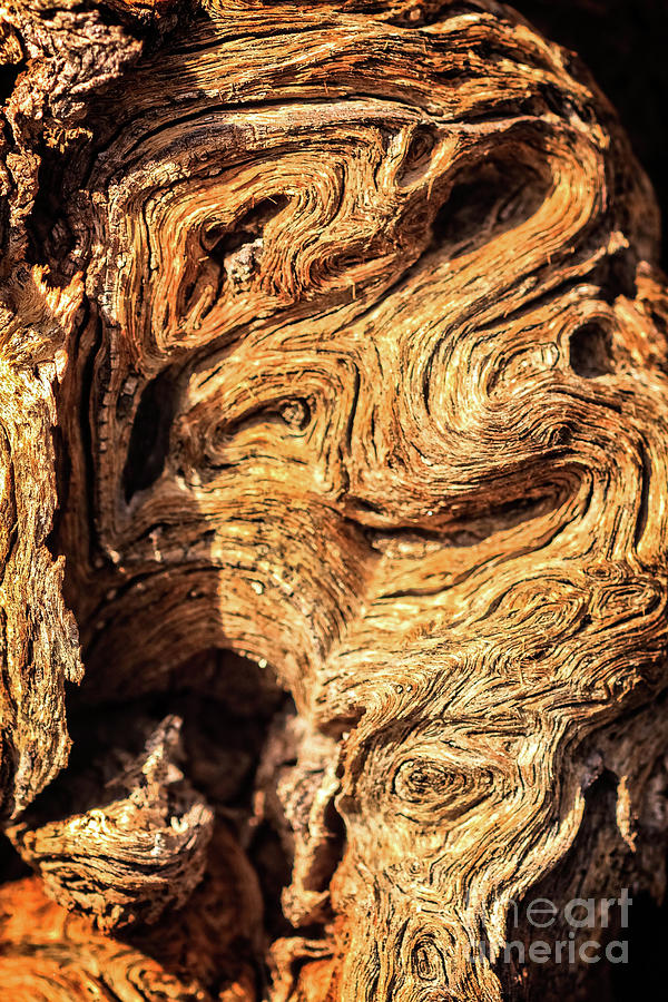 Nature Photograph - Close Up Of A Ironwood Tree by Robert Bales