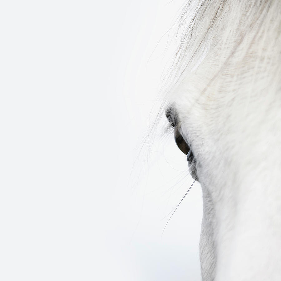 Close Up Of A Welsh Mountain Pony Photograph by Andrew Bret Wallis
