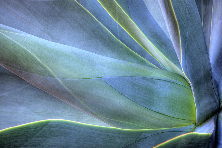 Close-up Of Agave, Maui, Hawaii, Usa Photograph by Gallo Images/danita Delimont