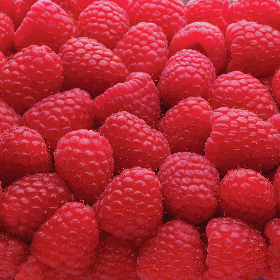 Close-up Of Freshly Picked Raspberries Photograph by Andrew Bret Wallis