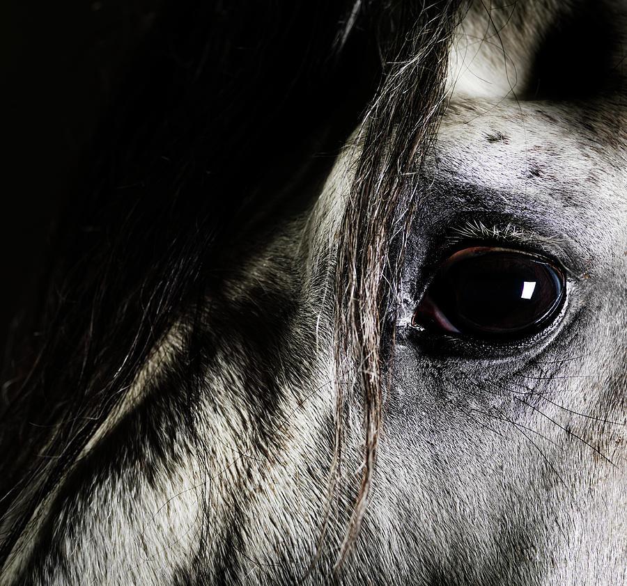 Close Up Of Grey Horse Eye Photograph by Henrik Sorensen