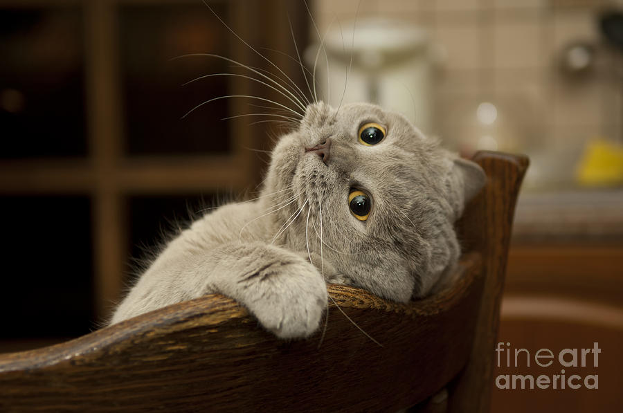 Pets Photograph - Close-up Of The Cat Is Played Naughty by Sergei Kaliganov