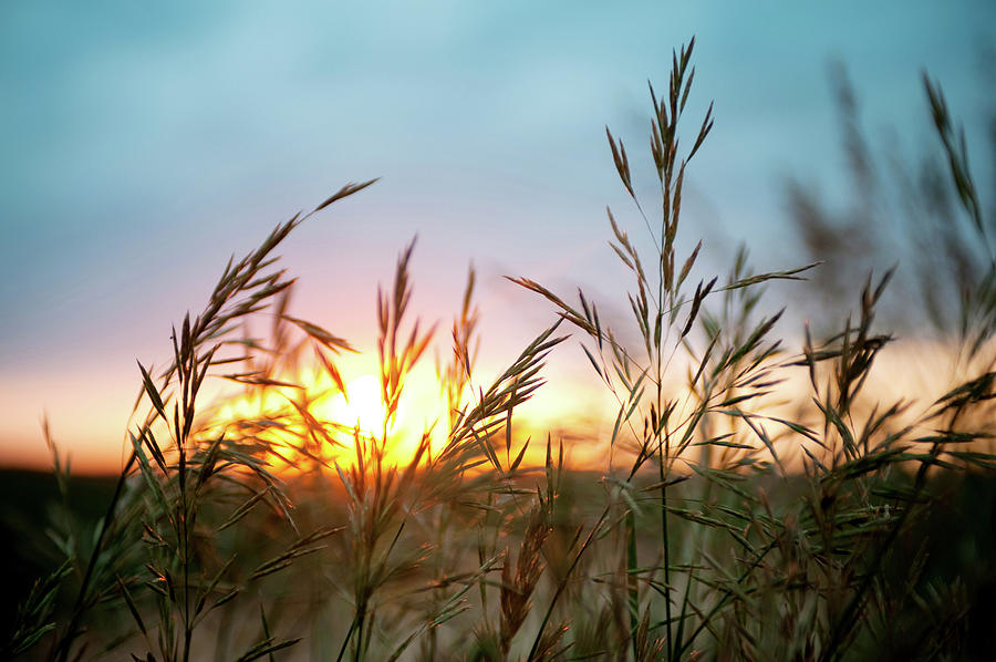 Close Up Of Wheat Field At Sunset Photograph by Jade Brookbank