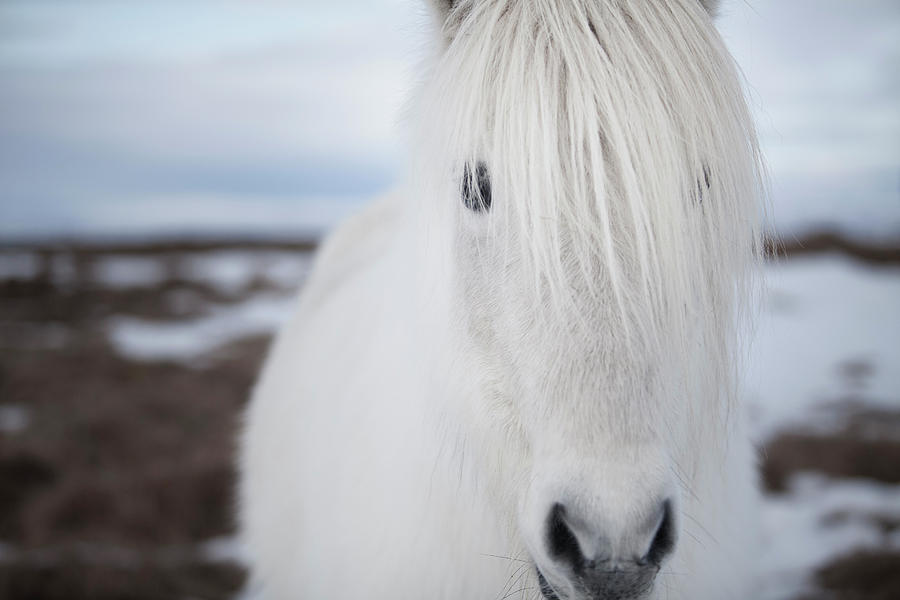 Close Up Of White Horses Face Photograph by Elli Thor Magnusson