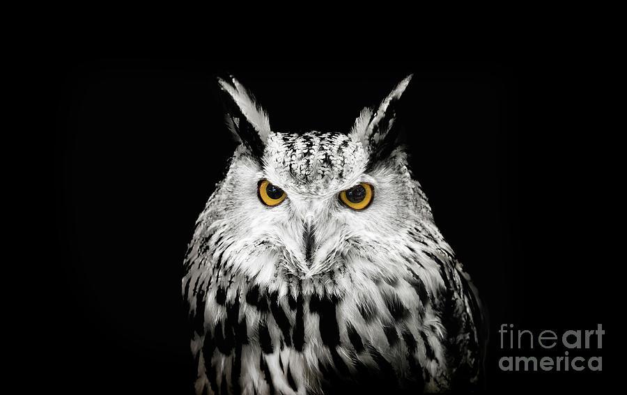 Close-up Portrait Of Horned Owl Photograph by Yanukit Raiva / Eyeem