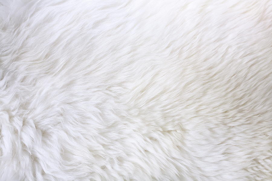 Close Up View Of White Fur Detail Photograph by Hypertizer