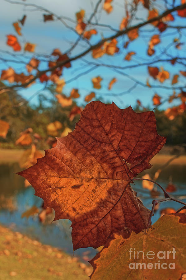 Closeup of a Leaf - 1307 by Marvin Reinhart