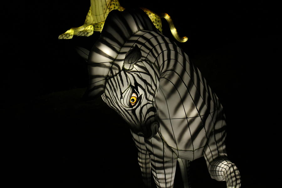 Zebra Photograph - Closeup of Zebra Christmas Decoration in Palm Desert by Colleen Cornelius