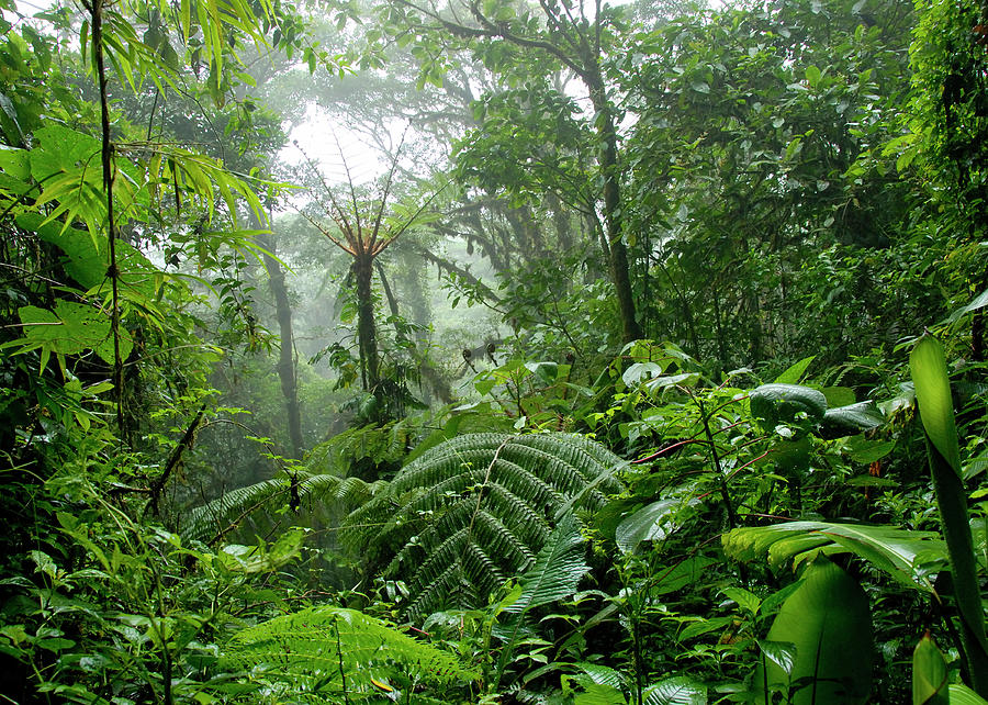 Cloud Forest In Costa Rica Photograph by Pacoromero