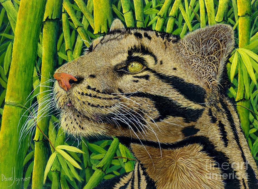 Clouded Leopard Queen by David Joyner
