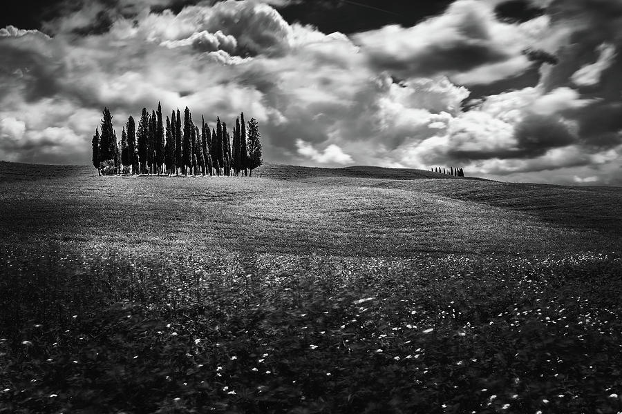 Cypress Trees Photograph - Clouds over cypress trees by Andrei Dima