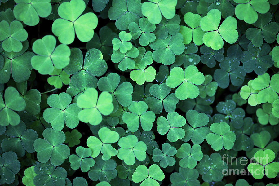 Clover Field Background Photograph by Aristotoo