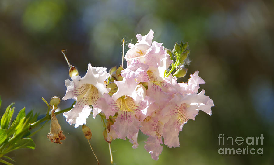 Flower Photograph - Cluster Of Beauties by Jeff Swan