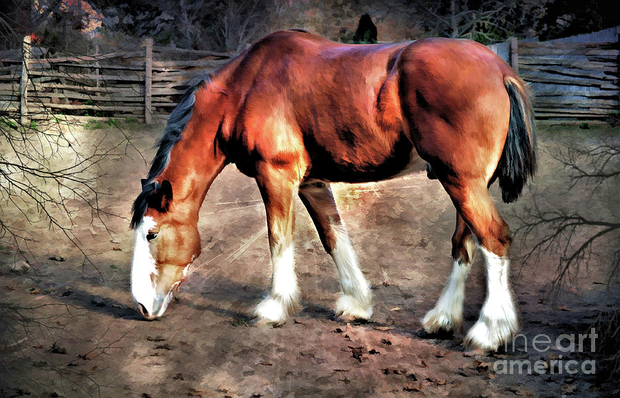 Clydeddale Horse  digital painting by Elaine Manley