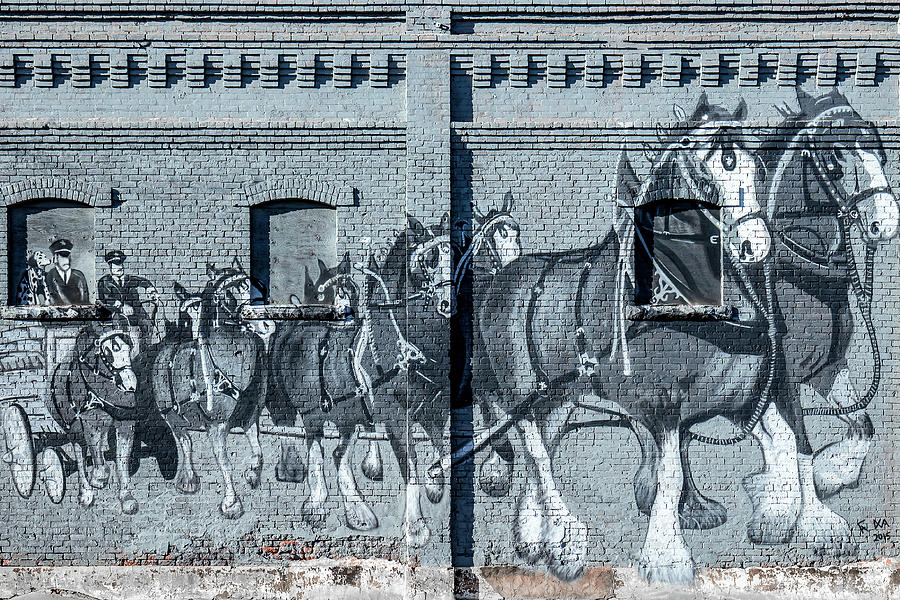 Clydesdale Photograph - Clydesdale Mural by Todd Klassy