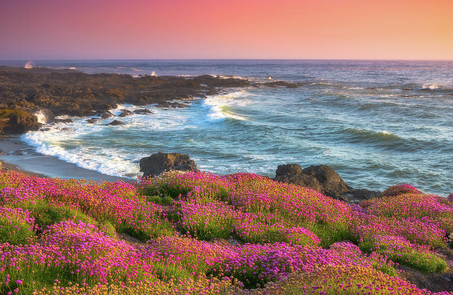 Coastal Clover Sunset by Darren White