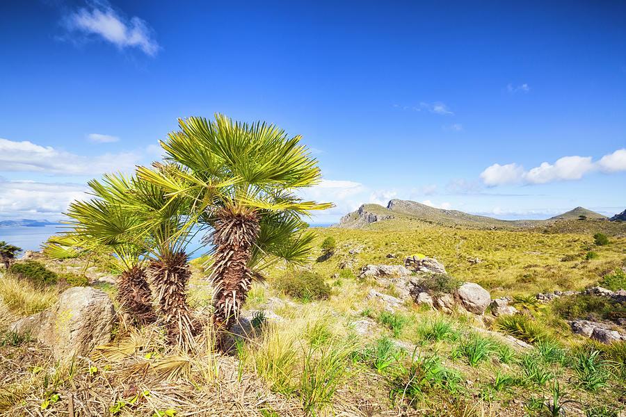 Coastal Mountain Of Majorca  Spain Photograph by Cinoby
