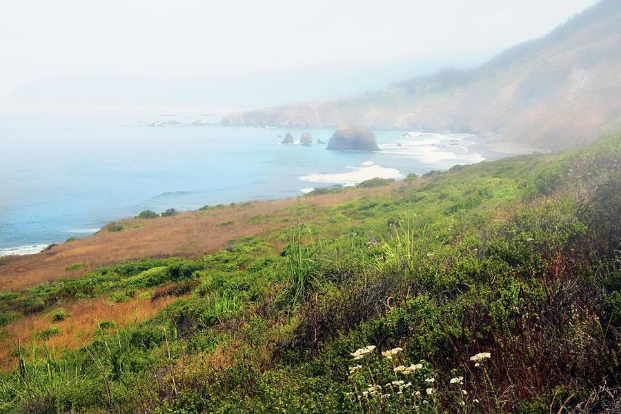 Coastal Views Fog by Frank Wilson