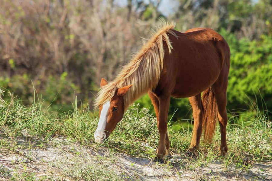 Coastal Wild Mustang by Bob Decker