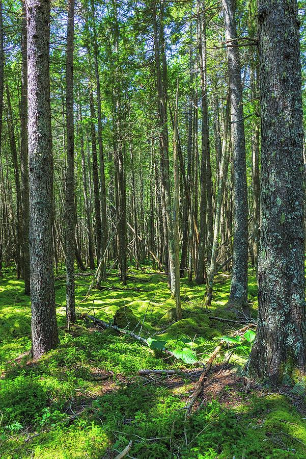Coastal Woodland by MIKE MCQUADE