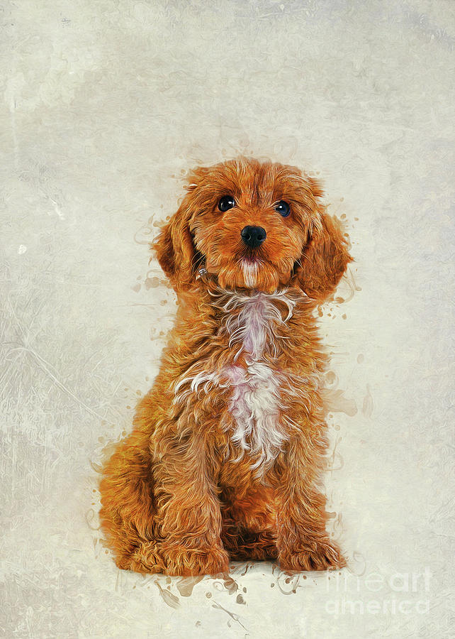 Cockapoo by Ian Mitchell