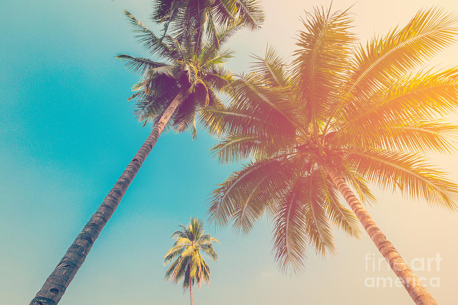Palm Photograph - Coconut Palm Tree With Vintage Effect by Tortoon