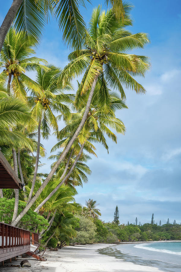 Coconut Palm Trees Kuto Bay beach by Daniela Constantinescu