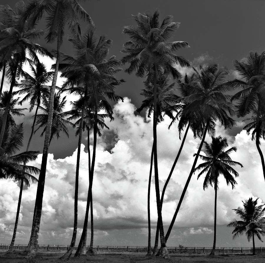 Coconut trees at Mayaro by Trinidad Dreamscape