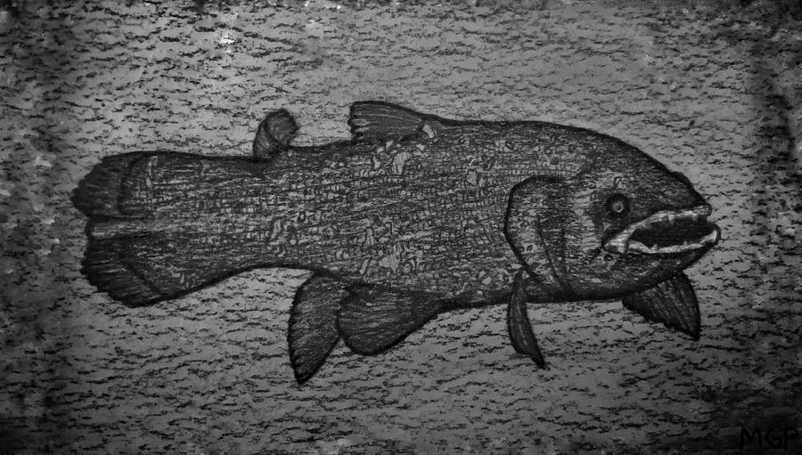 Coelacanth Portrait Drawing