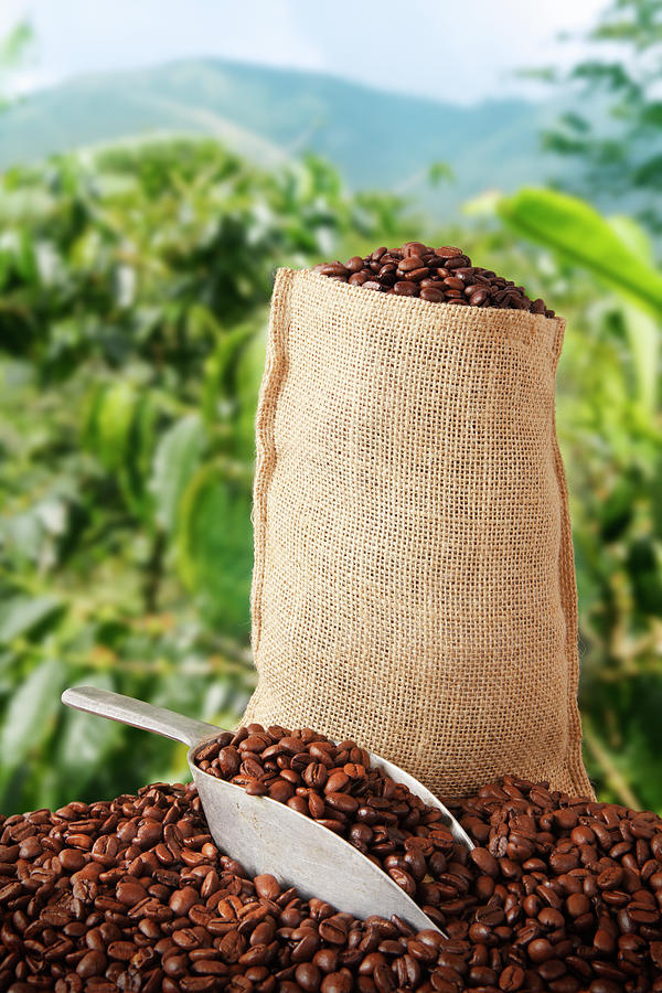 Coffee Bag And Plantation Behind Photograph by Narvikk
