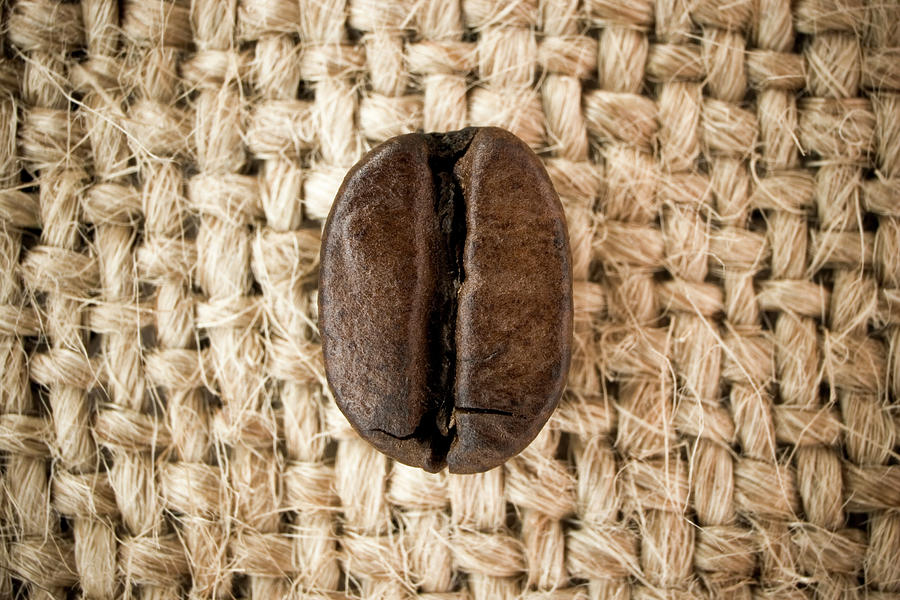 Coffee Bean Photograph by Azemdega