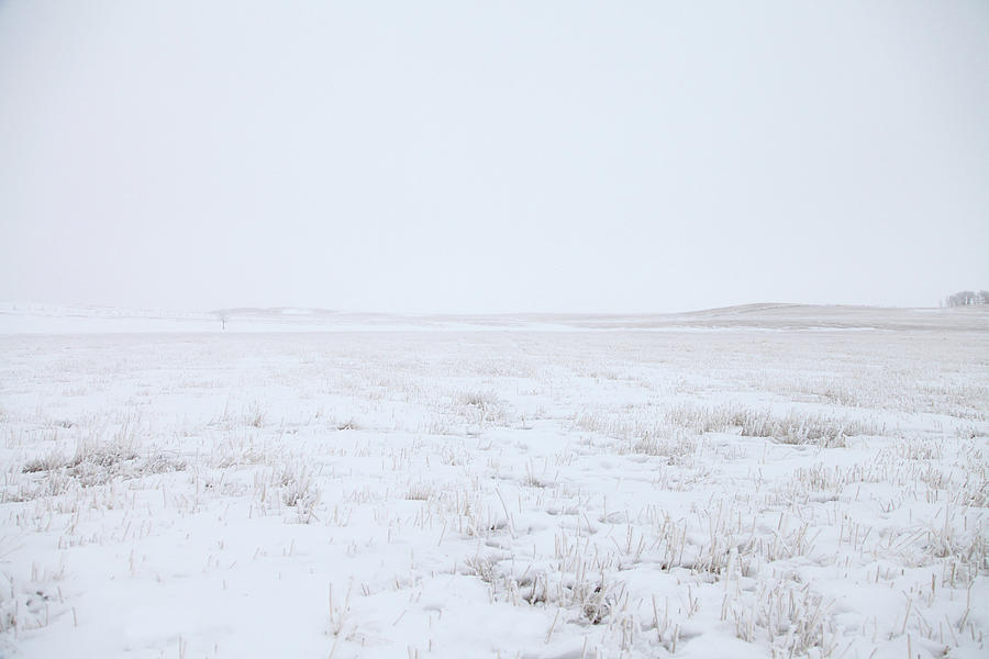 Cold Winter Scene Of An Open Wheat Field Photograph by Lori Andrews