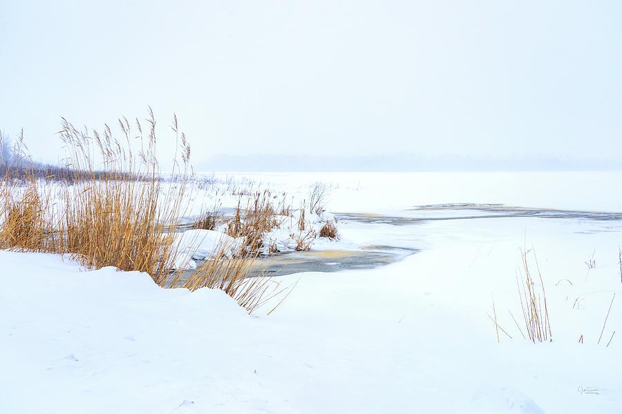 Cold winter snow scene by Judi Dressler