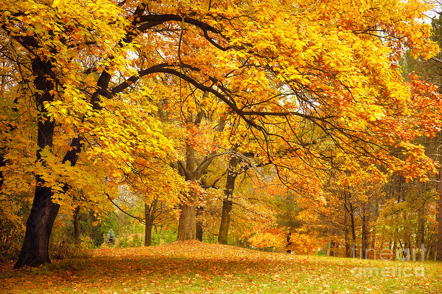 Country Photograph - Collection Of Beautiful Colorful Autumn by Taiga