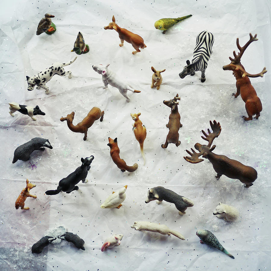 Collection Of Small Toy Animals Viewed Photograph by Fiona Crawford Watson