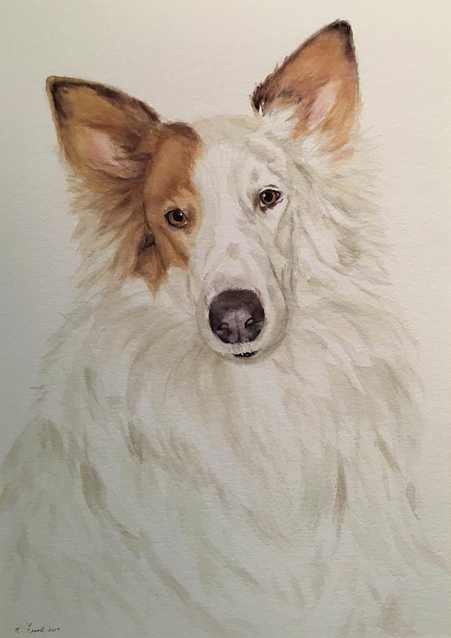 Collie by Kathy Flood