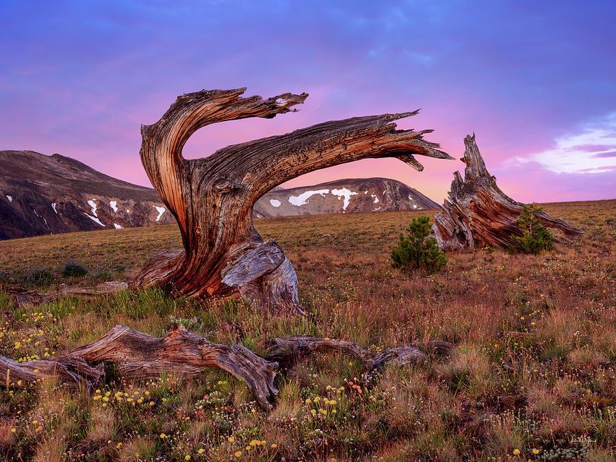 Altitude Photograph - Coloful High Mountain Splendor by Leland D Howard