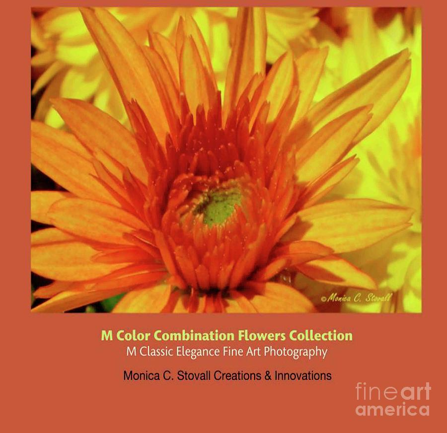 Color Combination Flowers Collection by Monica C Stovall