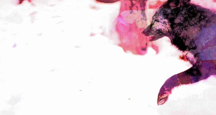 Color Run Photograph